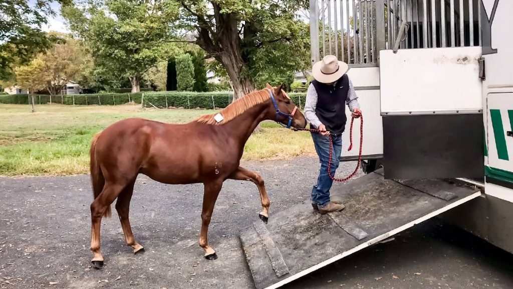 Horse Relocation